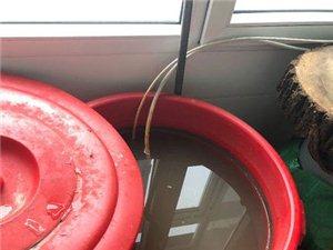 看看咱们巴彦县西集镇的自来水吧!