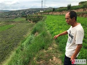 """张家川在线挖掘采访""""药王""""杨进良种药的一天"""