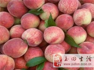 桃子大量上市的季�,可是桃毛�y清啊,怎么�k? 我有好�k法!
