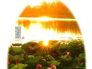 桦西湖荷塘系列四---晚霞月夜晨光