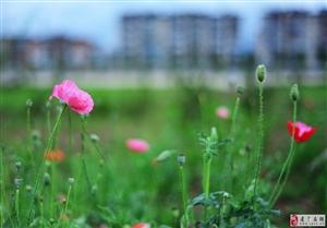 公园的小花