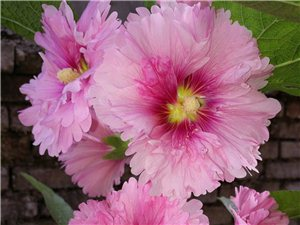 我的花��