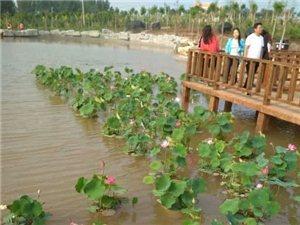 建平县假日休闲和晚上哪里最好玩?建平北山森林公园最热闹!