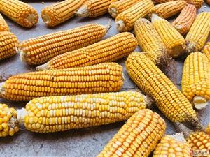 你家有玉米么?