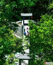 写在第三届杨梅节(三)
