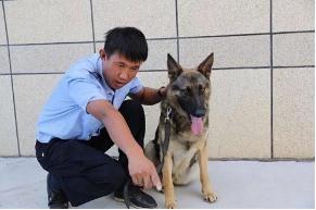 """警犬""""图图""""又扬威,助力警方再破案!!"""