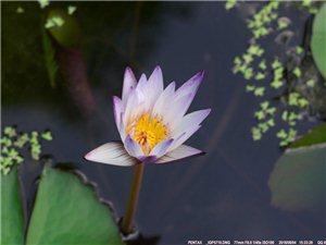 【花心】花的心藏在蕊中,空把花期都错过,你的心晶莹剔透,从不轻易让人懂