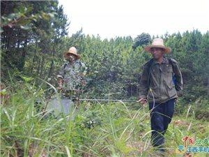 钟茂春:巡山护林27年的忠诚卫士