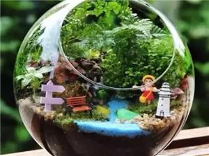 【圣庄园·东湖】微景观DIY|本周六圣庄园·东湖带你体验指尖小花园