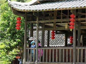 写在第三届杨梅节(四)