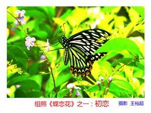 王裕超微距摄影作品组照《蝶恋花》欣赏