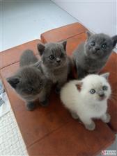 超级可爱的小猫