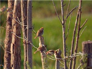 张建民摄影:兔踪鸟音