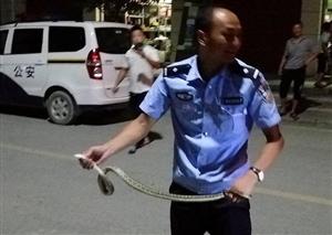 好可怕,一条蛇钻进了汉中娃的摩托车里
