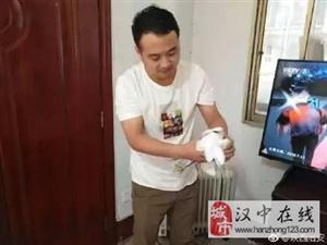 南郑民警救助国家一级保护动物