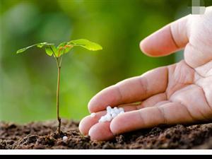 """澳门网上投注游戏""""科学施肥建议""""让农民获益"""