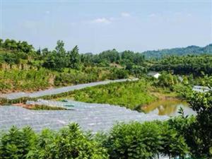 干塘村的生态文明路