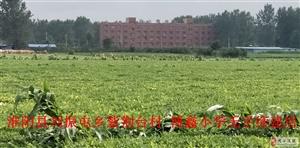 周口市淮阳县两个乡镇拆除违法占地私立学校存在造假行为