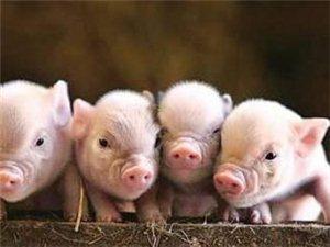 郑州发生一起生猪非洲猪瘟疫情;目前疫情已得到有效控制