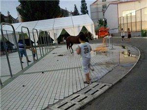 即墨区体育场现在变成了马粪场