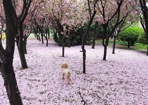 山东威海荣成樱花湖体育公园真的美