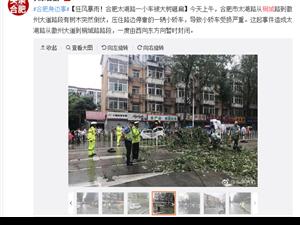 狂风暴雨!合肥太湖路一小车被大树砸扁
