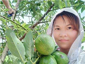 【草根电商扶贫】85后美女做微商 一个月助农户销售近10万斤芒果