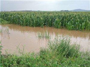 大雨过后,即墨一处庄稼地受灾严重!雨水最深处达1.2米...