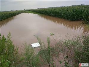大雨过后,即墨一处庄稼地受灾?#29616;兀?#38632;水最深处达1.2米...