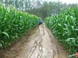 实拍农村夏季,遂平的老乡有没有很眼熟?