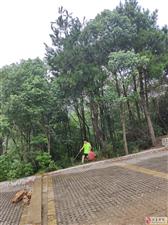 江夏徒步群参与我爱八分山环保活动掠影