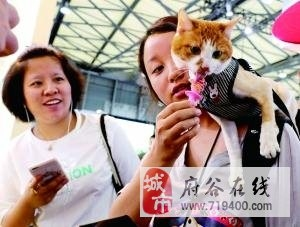 宠物经济创造商机 犬猫宠物市场规模已达到1700多亿
