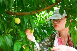 通许千菊园桃子成熟开园仪式