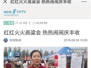 这片高粱地红红火火!阜城举办首届红高粱文化节!央视新闻新媒体现场直播