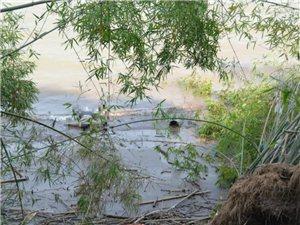 江安长江边发现2具无名尸体,其中一具入水30天,高度腐败