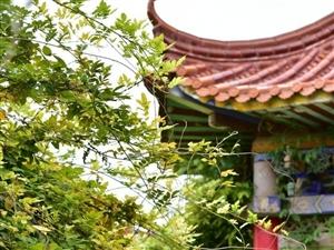 【武功古城】紫藤花开――党小成
