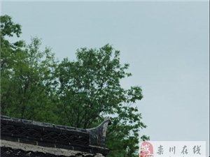 初秋――雨下的�璐ㄇ徽{