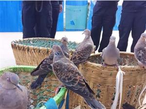 遂平县森林公安局查处一起非法捕鸟案件