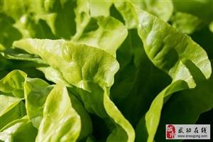 药补不如食补,日常蔬菜功效一览表!您的体质该吃什么,一目了然!懂点养身