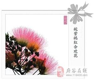 你可知道合欢花的药用价值?