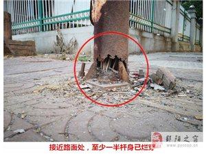触目惊心!这根路灯杆岌岌可危,严重威胁行人安全……