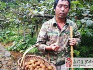 双目失明独居山中 他为何坚持要与猕猴桃相伴20年?