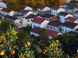 定了!澳门美高梅国际娱乐场城固柑桔旅游文化节将于9月21日拉开帷幕