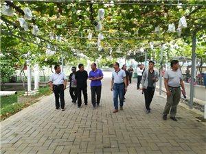 合阳县农科局园区办学先进调思路加快现代农业园区公园化建设