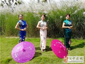 汉中赏芦苇花的两个好地方