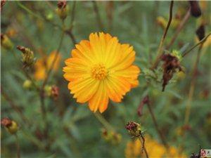 你知道这些花叫什么名字吗?真漂亮!