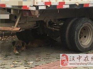 多只无主野狗咬伤多名群众被捕杀