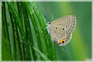 昆虫与微距