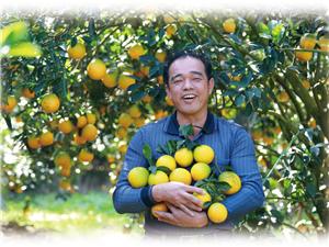 【草根电商扶贫】电商助力,白沙红心橙从1块钱一斤卖到15块钱一斤