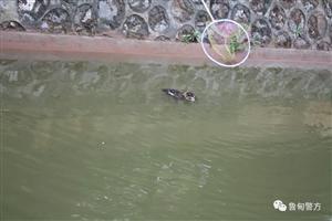 """猫头鹰在河中""""游泳""""鲁甸县森林公安局民警到场发现真相是......"""